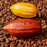 Cacaopodsbeans-150x150